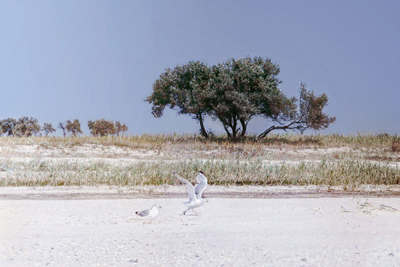 Лиман. Серія фоторобіт Сергія Кубасова